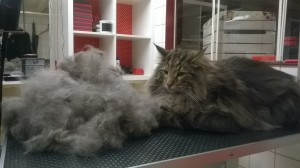 Katten trimsalon Amsterdam, The Catbarber